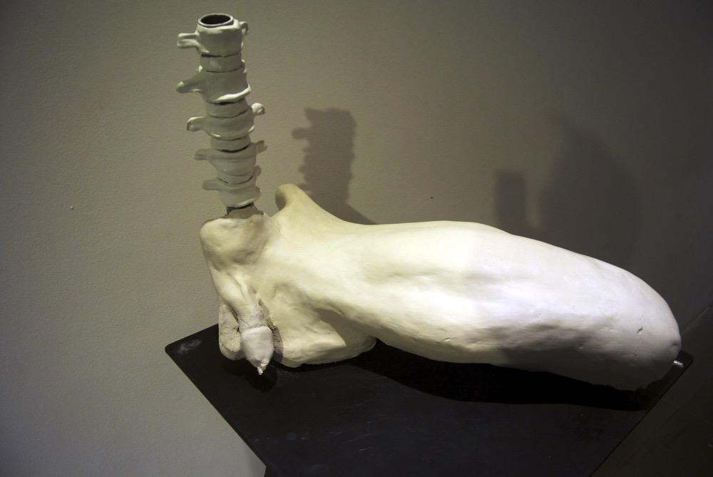 The Missing Bone (Baculum)