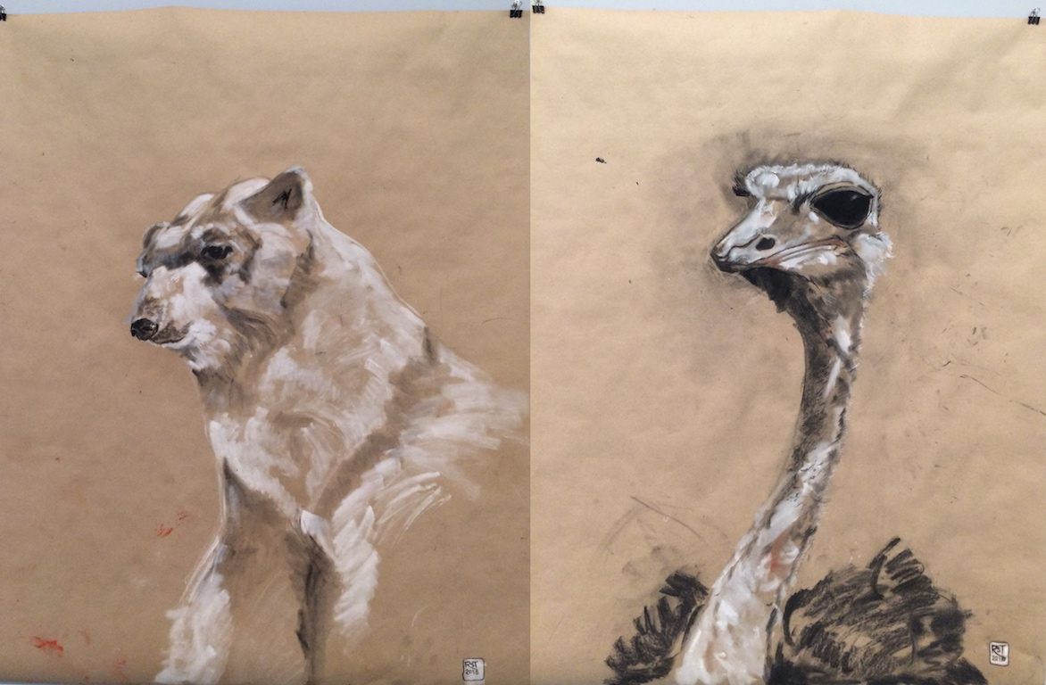 The Species Drawings